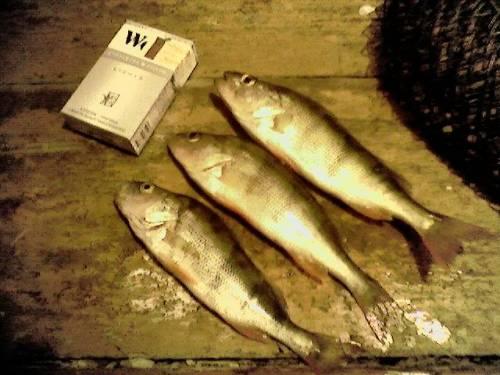 рыболовные магазины в могилеве ерш