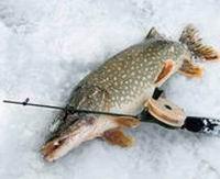Зимняя рыбалка на щуку: охота на хищницу.