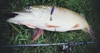 Выбор снастей для рыбалки осенью. Проф советы по выбору спиннингового комплекта.
